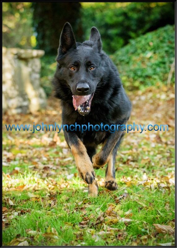 Pet Photographer Kent