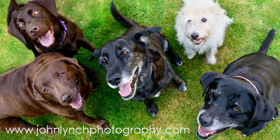 Pet Photography Ashford Kent