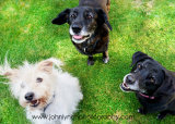 Pet Photography Ashford Kent