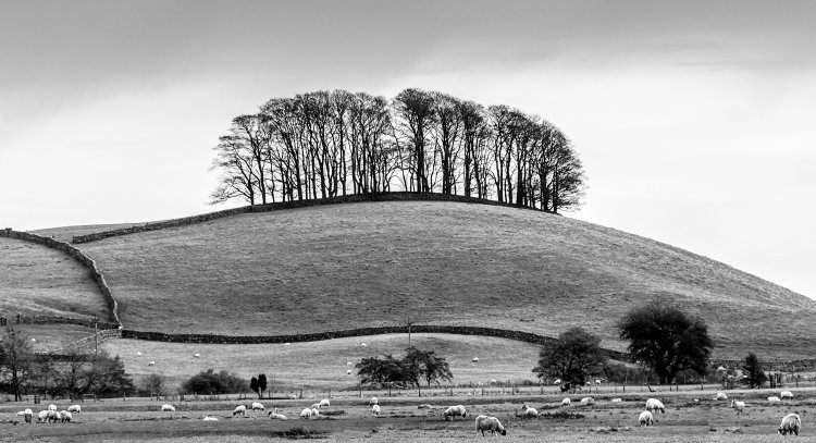 The Copse on the hill