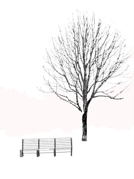 Tree and bench