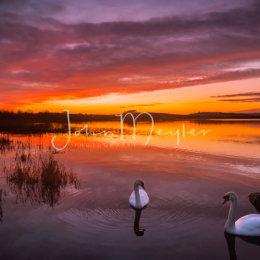 SPJ-4-The swans of Ballyalla 2