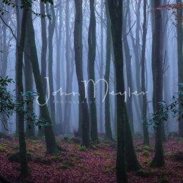 SPJ-5-Spooky Mooghaun Woods