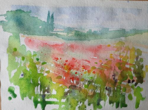 Poppies in the Moss Valley