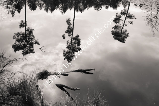 Black Lake Reflections