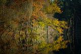Dead Lake in Autumn