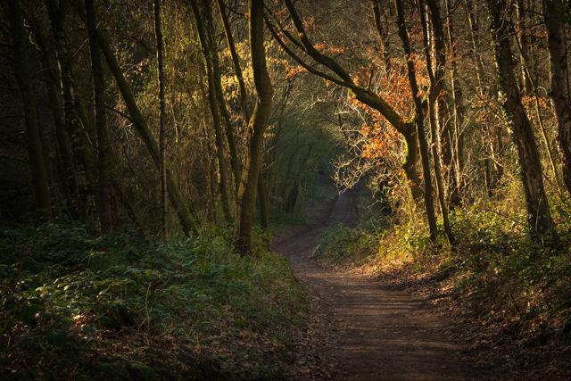 Path to Burwardsley