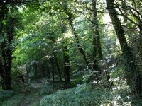 Barnsdale Forest