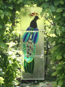 peacock                                           NFS