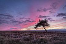 0267 Egton Moor Twilight