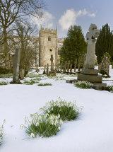 0919 Arncliffe Snowdrops