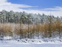 2453 Was Bank Wood