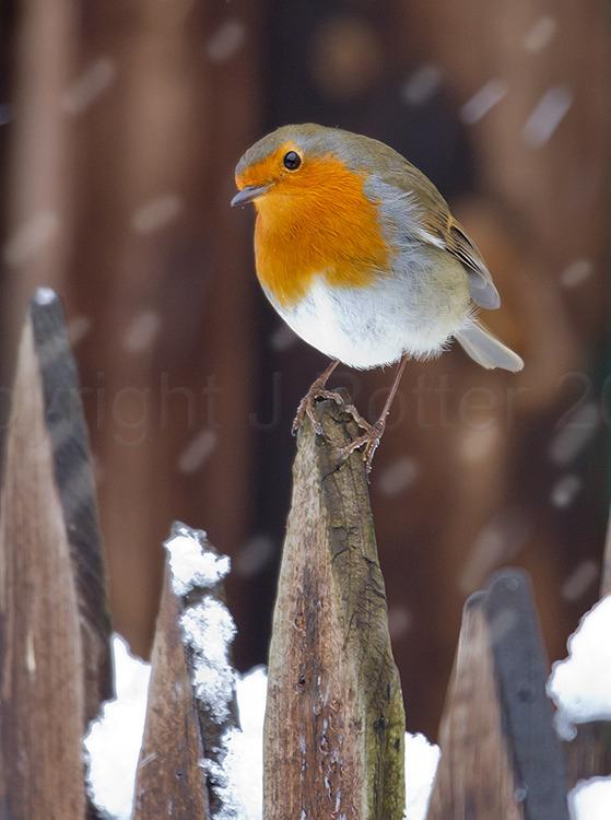 2506 Robin