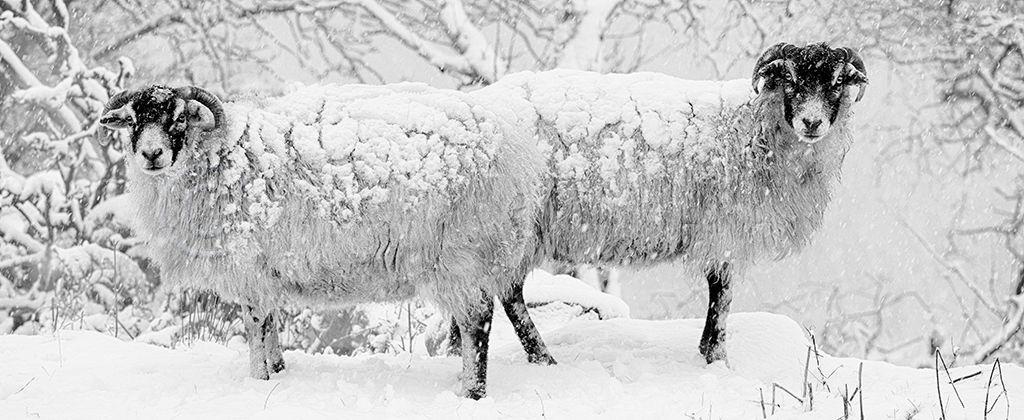 1041 Winter Woolies