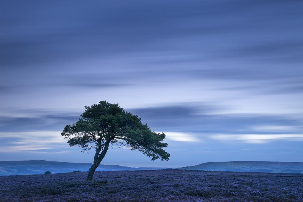 3494 Lone Pine Tree