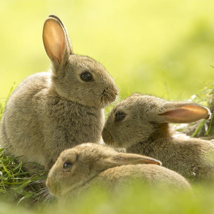 4974 Young Rabbits
