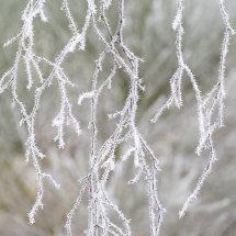 5716 Birch Ice Crystals