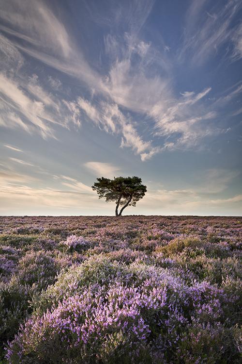 7233 Lone Pine Tree