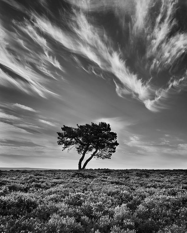 7241 Mares Tails Over Egton Moor