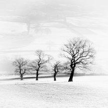 7599 Farndale Trees
