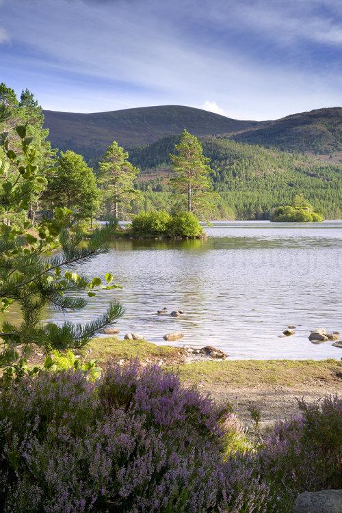 8556 Loch an Eilein