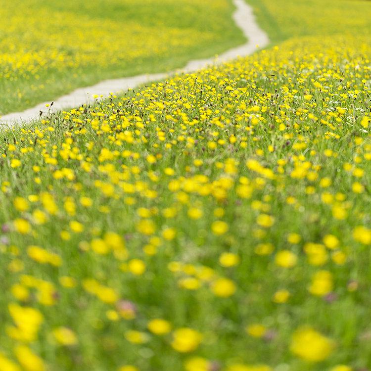 9671 Wild Flower Meadow