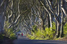 9978 The Dark Hedges,  County Antrim, Northern Ireland
