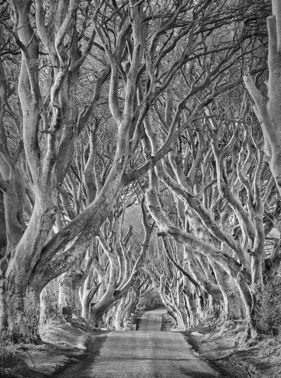 9921 Dark Hedges Mono County Antrim, Northern Ireland