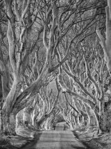 9921 Dark Hedges Mono