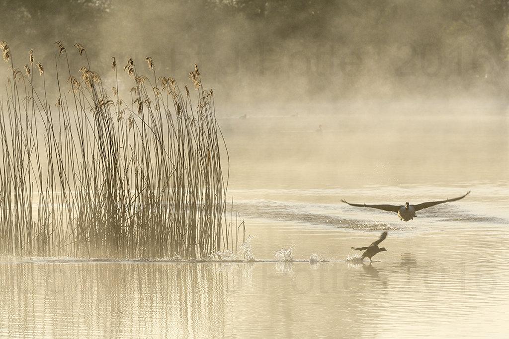 9988 Castle Howard Birds in Flight