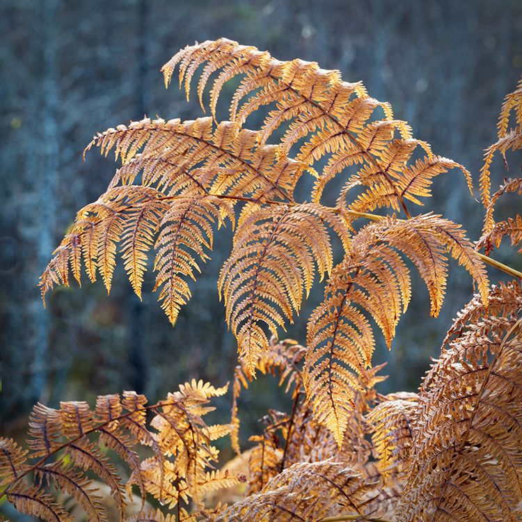 D50113 Autumn Glow Glen Affric