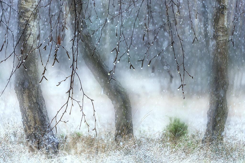 1801 Snowfall Strensall Common Jan 8th 2021