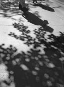 leafy walk