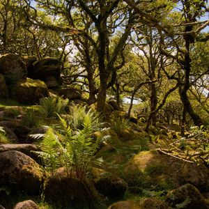 Wistman's Wood, Dartmoor National Park, UK