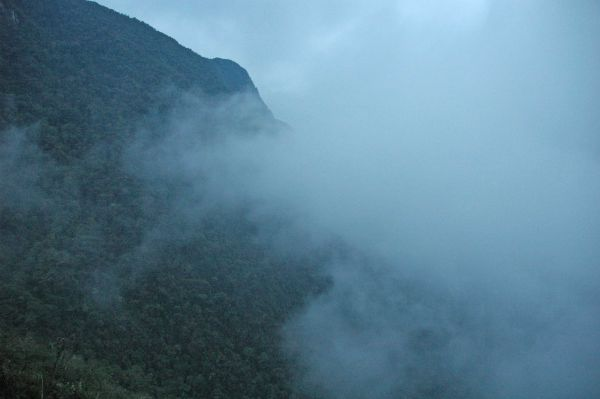 Cloud Forest, Andes, Peru
