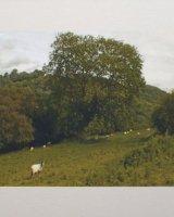 Sheepscape.