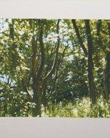 Treescape.