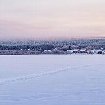 11 Snow Tracks at Dusk
