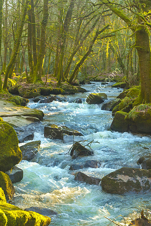 The River Fowey winding its way through the trees at Golitha Falls on Bodmin Moor.
