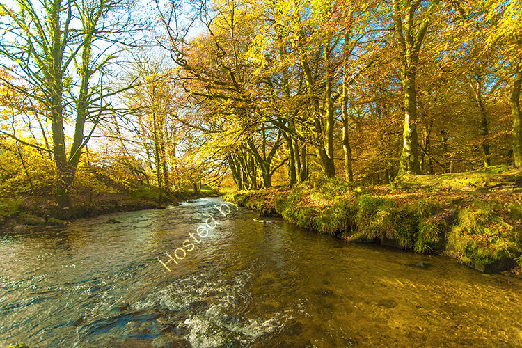 Autumn at Golitha Falls, with the River Fowey.