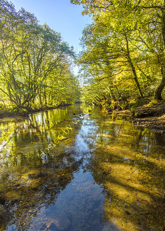 The River Lynher at Callington Newbridge.