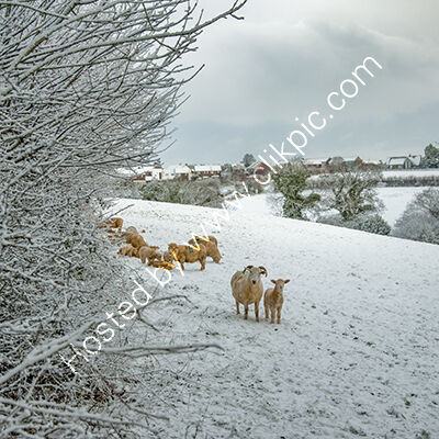 This photograph was taken at Dobwalls in East Cornwall'