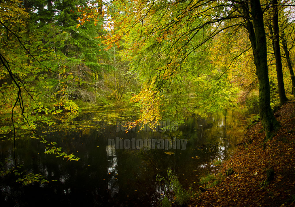 Druid Loch Drumlanrig Dumfries and Galloway