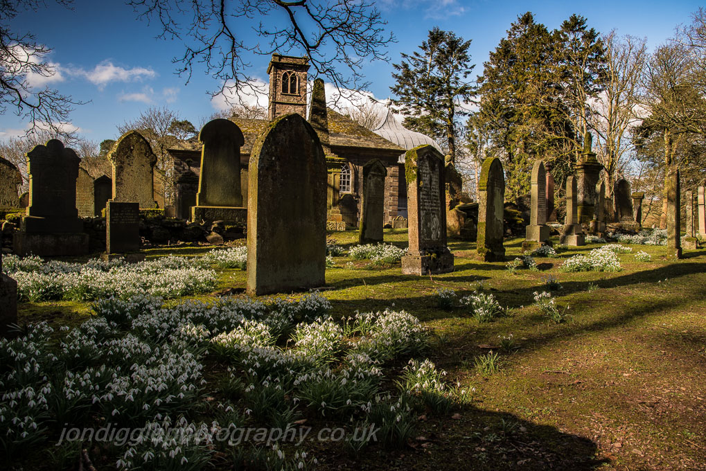 Durisdeer Churchyard Snowdrops