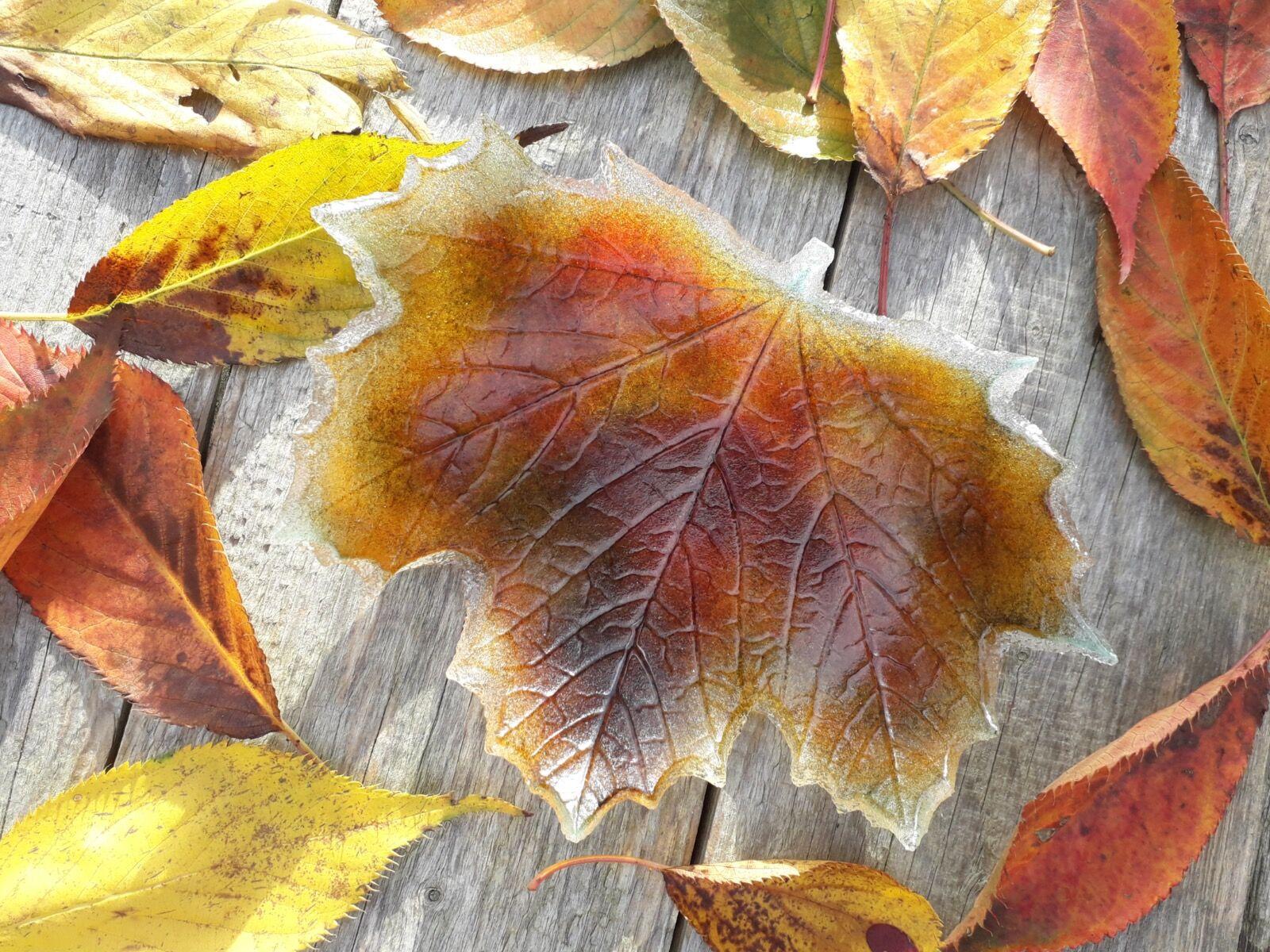 Fallen Leaf Dish