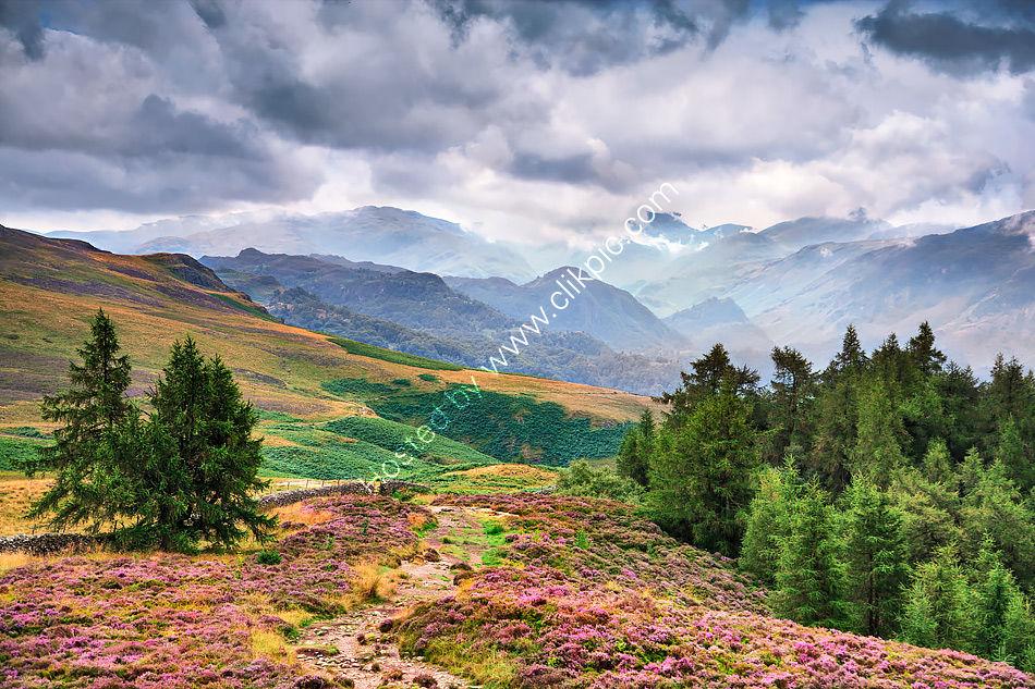 Borrowdale from Walla Crag