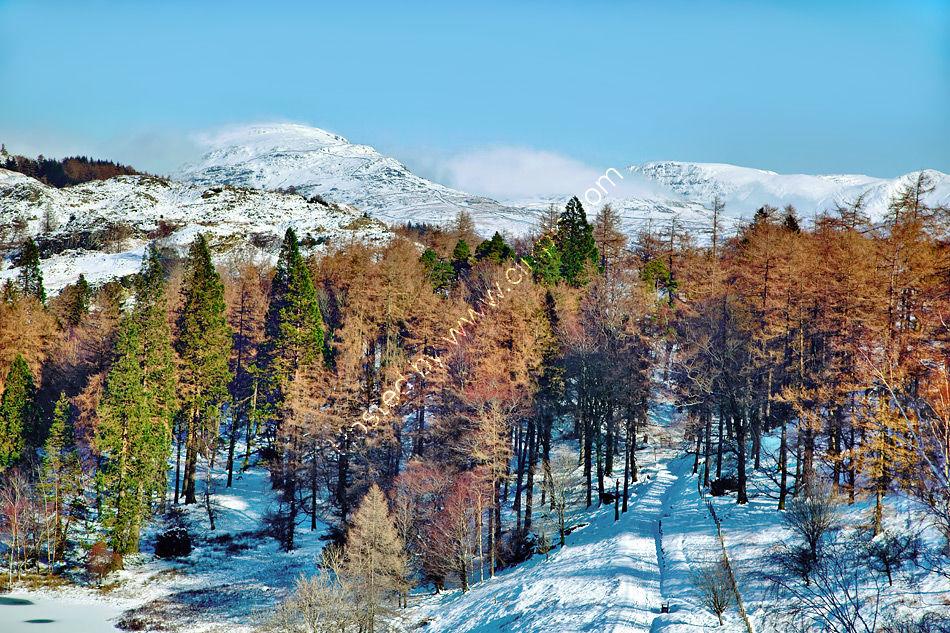 Tarn Hows Woodland