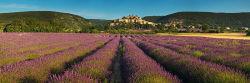 Banon lavender field, Provence