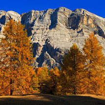 Santa Croce & Golden Larch Trees