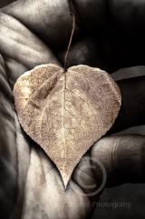 Gold Leaf ......